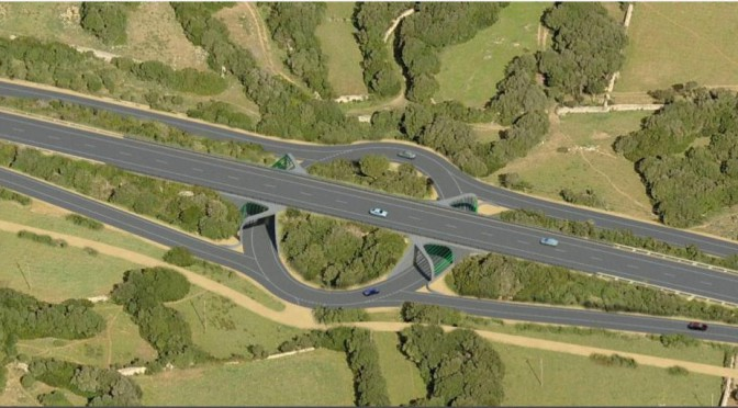 Proposal for reconsideration of the plans for the main road of Menorca