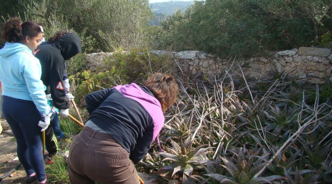 Volunteers removing invasive plants