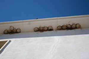 Group of 15 destroyed house martin nests