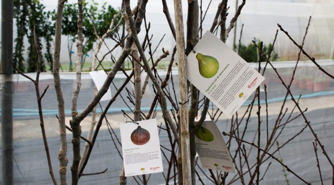 Fruit trees for sale at Es Viver
