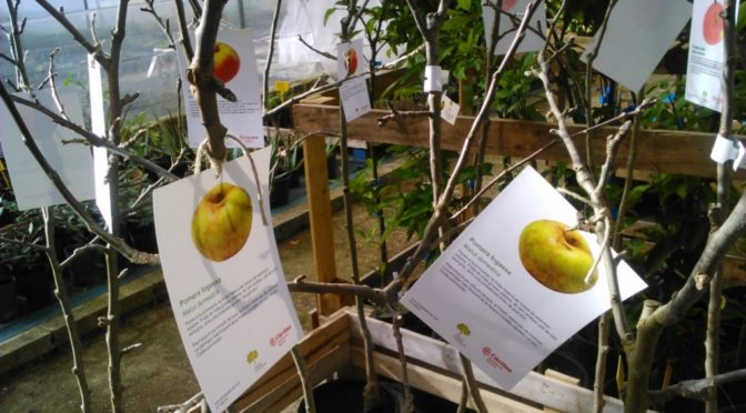 Give presents of Menorcan fruit trees