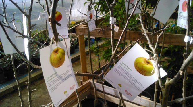 Ecological fruit trees for sale at Es Viver