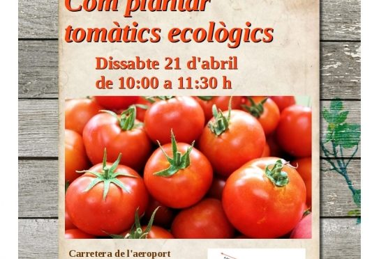 Workshop on cultivating ecological tomatoes