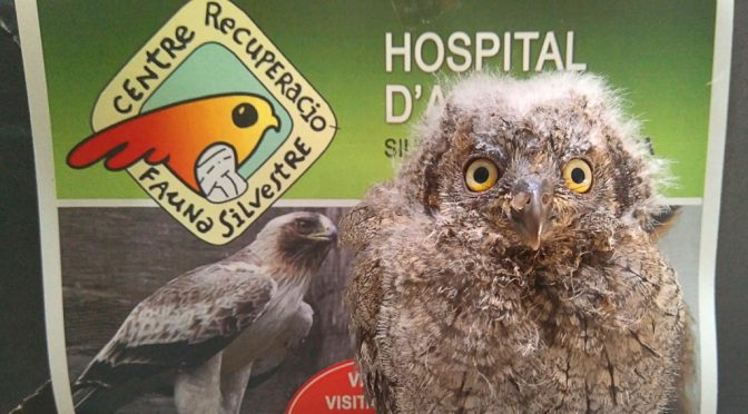 Visit the Hospital for Wild Animals this summer!
