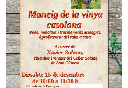 Workshop on the care of vines at Es Viver