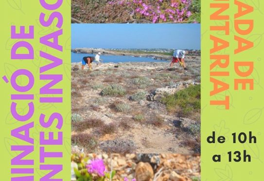 Help us to get rid of invasive plants at Cap d'Artrutx
