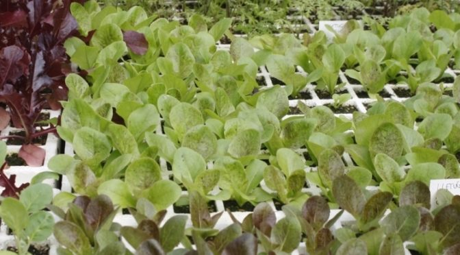 Sale of seedlings at Es Viver