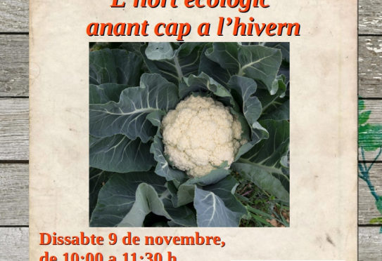 Saturday workshop on winter gardening at Es Viver
