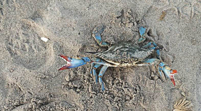 We ask that professional fishing for blue crabs is given an incentive