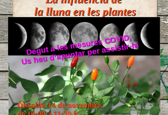 Workshop on the influence of the moon on the plants