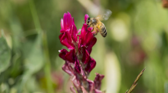 Agriculture that embraces biodiversity