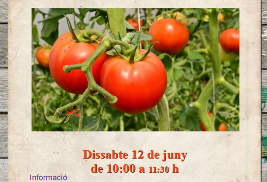Saturday 12 June, workshop on cultivating ecological tomatoes