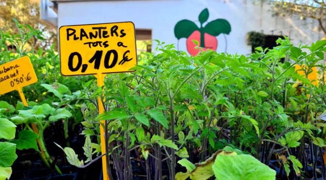 Sale of seedlings for kitchen gardens at Es Viver