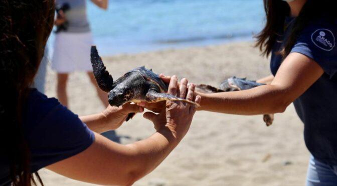 Volunteering for marine turtles